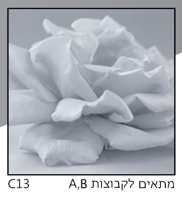 אריחי זכוכית C13