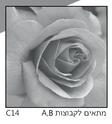 אריחי זכוכית C14