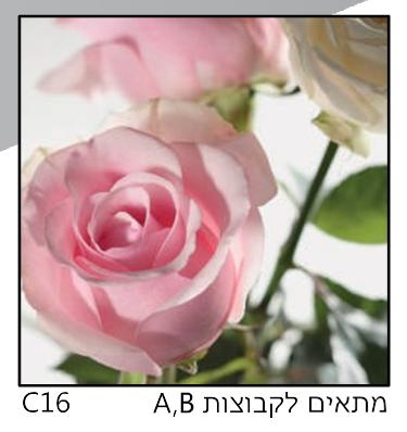 אריחי זכוכית C16