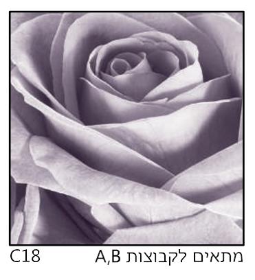 אריחי זכוכית C18