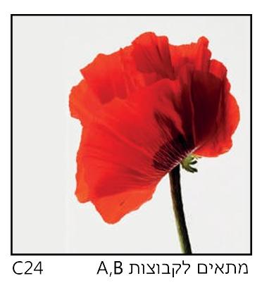אריחי זכוכית C24