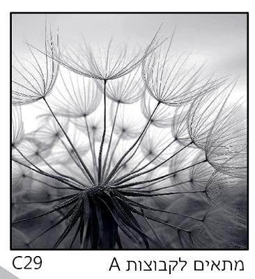 אריחי זכוכית C29