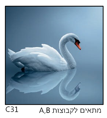 אריחי זכוכית C31