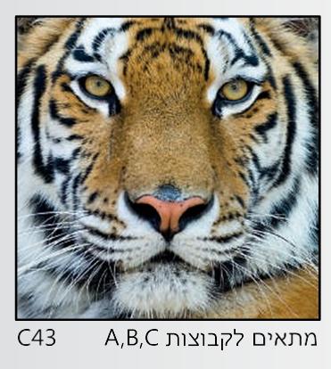 אריחי זכוכית C43